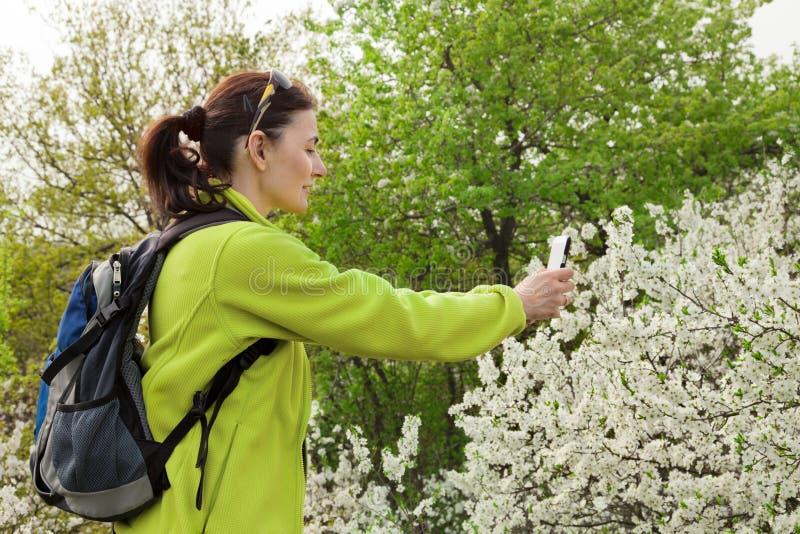 拍一棵开花的树的照片的妇女远足者 库存照片