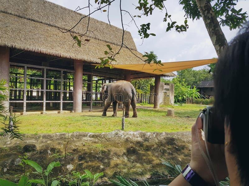 拍大象的照片的亚裔妇女在动物园 图库摄影