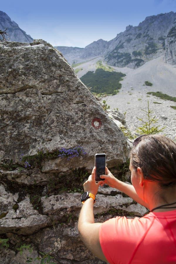 拍摄紫罗兰色山花的女性远足者 库存照片