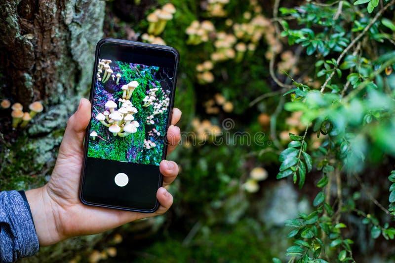 拍照片的妇女手对与智能手机的蘑菇 免版税库存图片