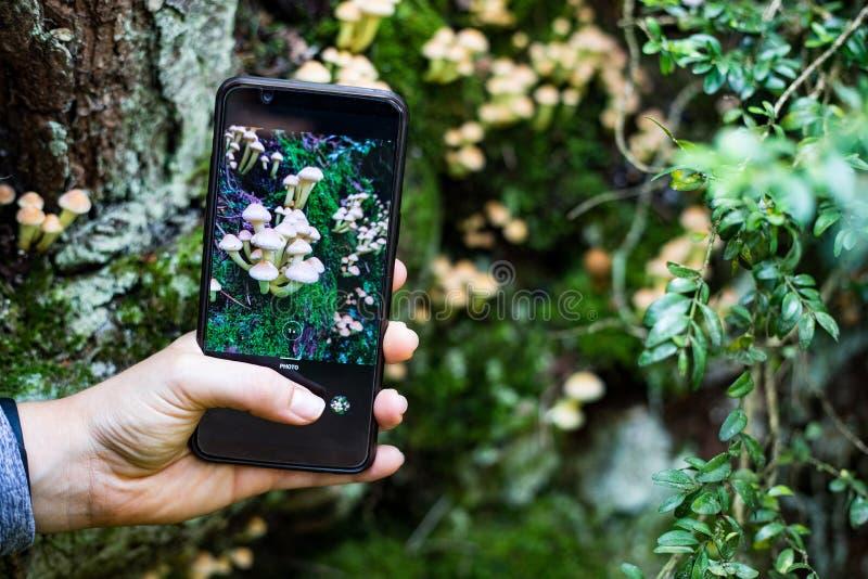 拍蘑菇的照片与智能手机的 库存图片