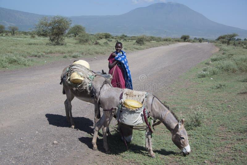 拖拉有她的驴的Maasai女孩水桶在土路在Natron是坦桑尼亚,非洲 免版税库存图片