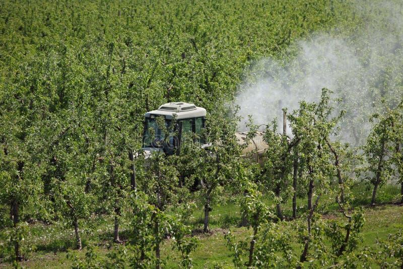 拖拉机喷洒的杀虫药或杀真菌剂在苹果树 免版税图库摄影