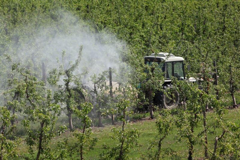 拖拉机喷洒的杀虫药或杀真菌剂在苹果树 库存图片
