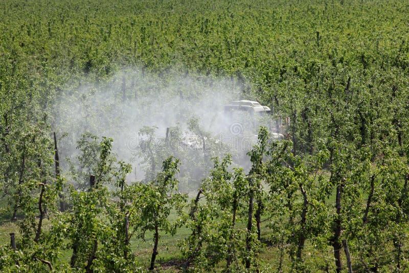 拖拉机喷洒的杀虫药或杀真菌剂在苹果树 免版税库存图片
