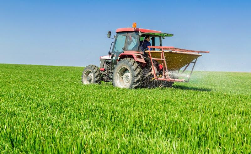 拖拉机施肥麦田的农夫在有npk的春天 免版税库存照片