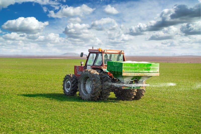 拖拉机施肥麦田的农夫在有npk的春天 库存图片