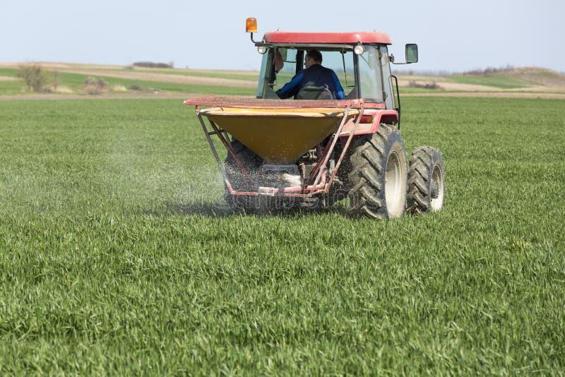 拖拉机施肥麦田的农夫 免版税库存照片