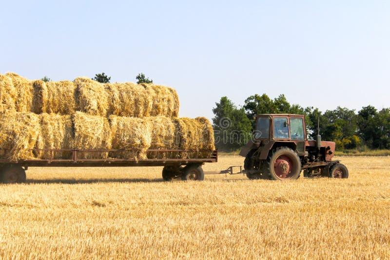 拖拉机运载的干草捆在堆滚动-堆积他们 收集大包在领域的干草的农业机器 免版税图库摄影