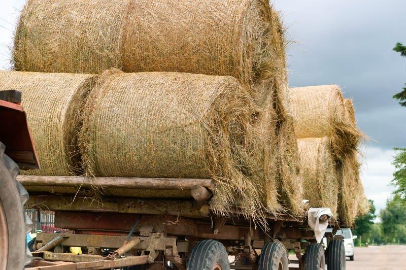 拖拉机运输扭转的捆干草,在农业机器的拖车的秸杆卷 免版税库存图片