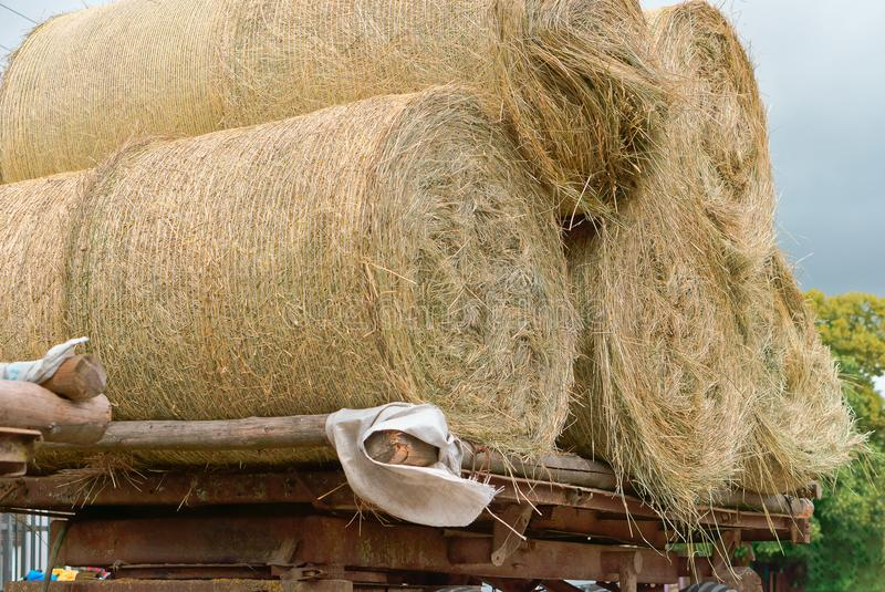 拖拉机运输扭转的捆干草,在农业机器的拖车的秸杆卷 库存照片