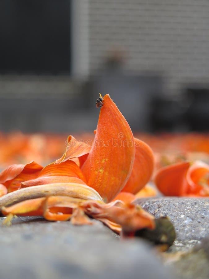 拙劣的柚木树 免版税库存图片