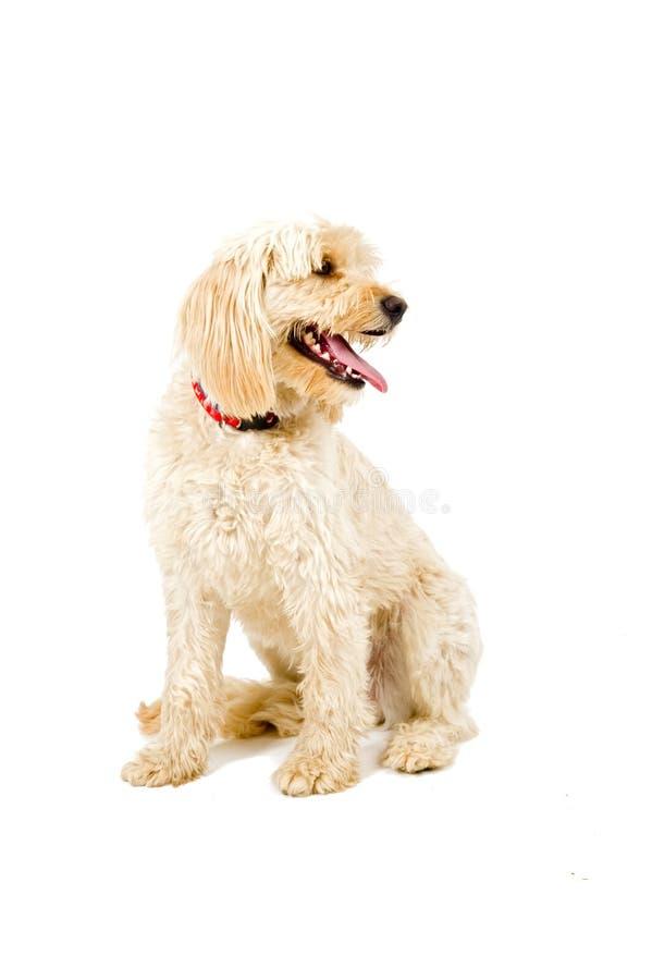 拙劣的狗 免版税库存照片