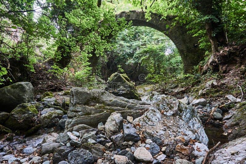 拜占庭式的桥梁的石头废墟在一个密集的森林里 免版税库存照片