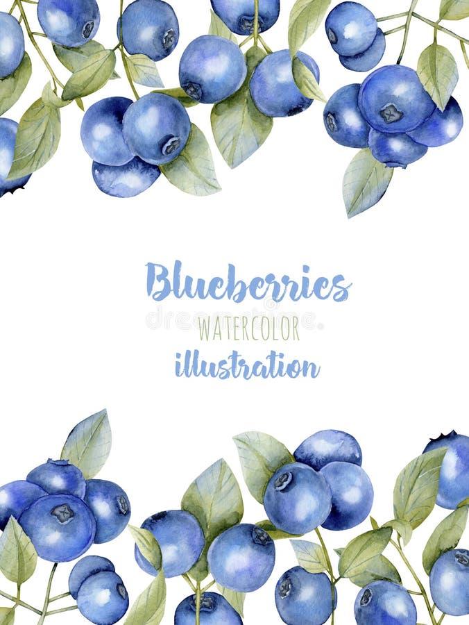 拟订与水彩蓝莓分支的模板,框架边界背景 向量例证
