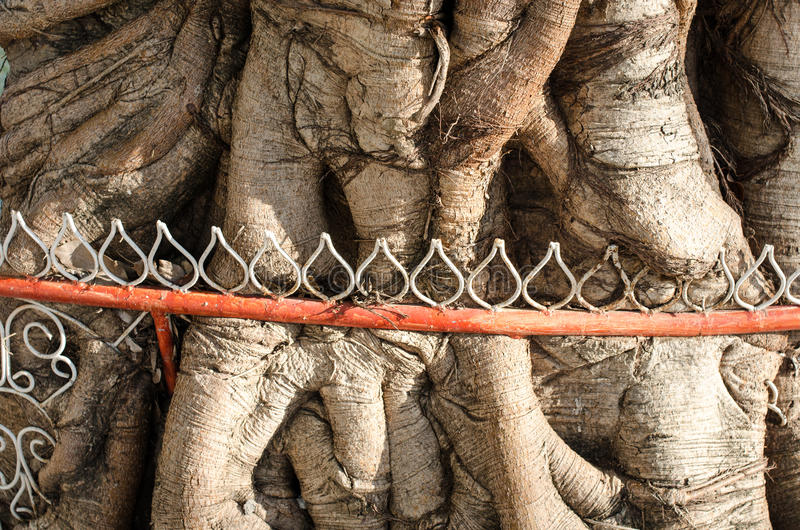 围拢树的铁篱芭 库存图片