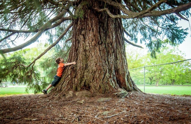 拥抱一棵大树的男孩 库存照片