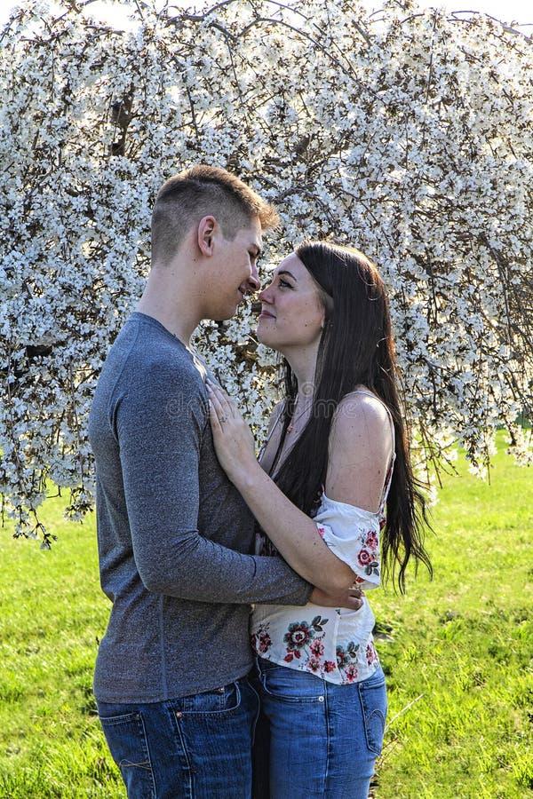 拥抱在美丽的啜泣的樱花树前面的夫妇春天 从事 库存照片