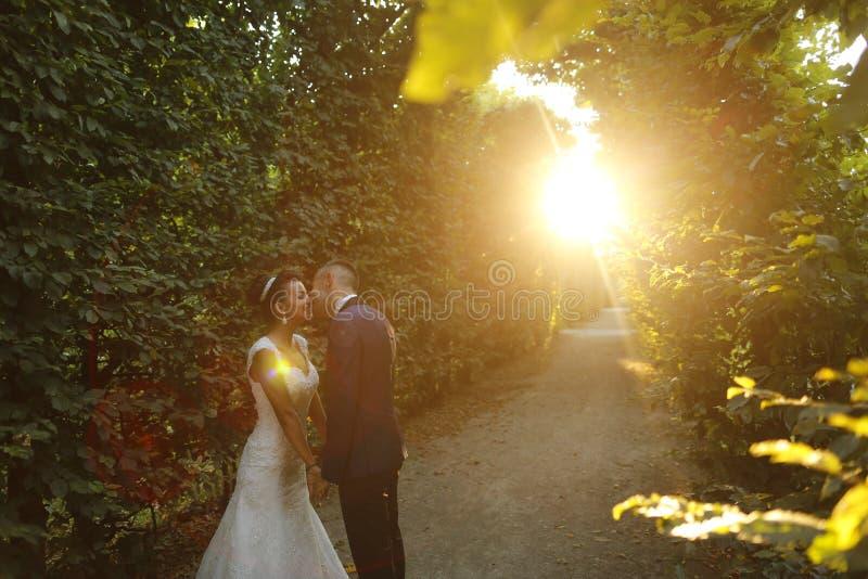 拥抱在黄昏的美好的新娘夫妇在阳光下 库存照片