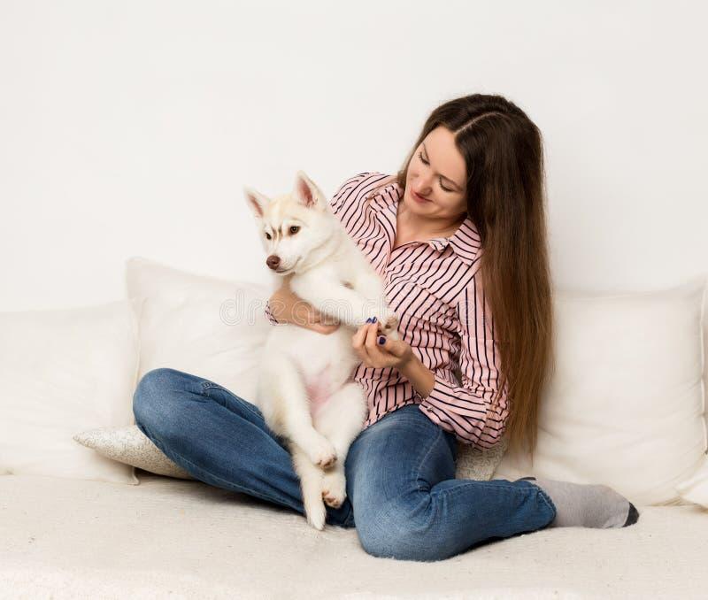 拥抱小狗爱斯基摩的愉快的美丽的妇女 女孩坐有狗的一个沙发 免版税库存图片