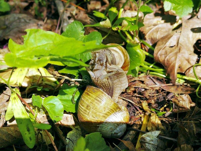 拥抱柔和的蜗牛的夫妇亲吻和户外 免版税图库摄影