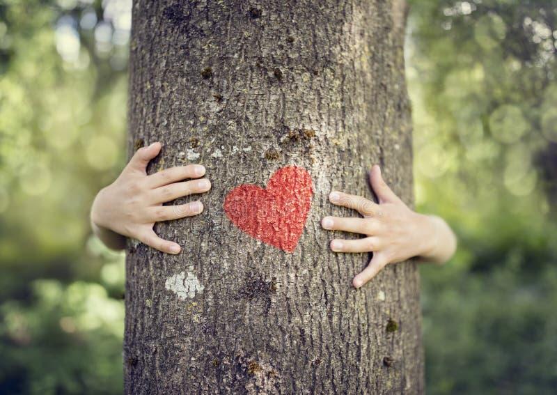 拥抱的树,爱自然 免版税库存照片
