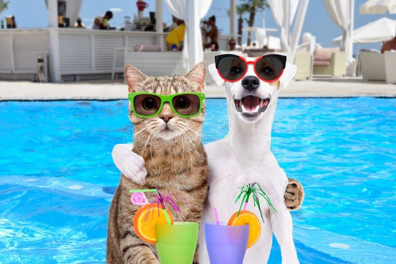 拥抱的狗和猫,拿着在爪子的鸡尾酒 免版税库存照片
