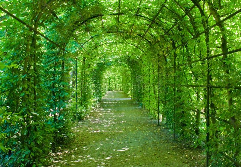 拱廊绿色 免版税图库摄影