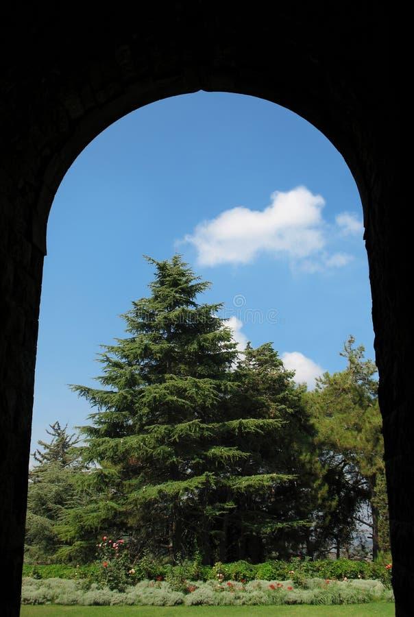 拱门和雪松 免版税库存图片