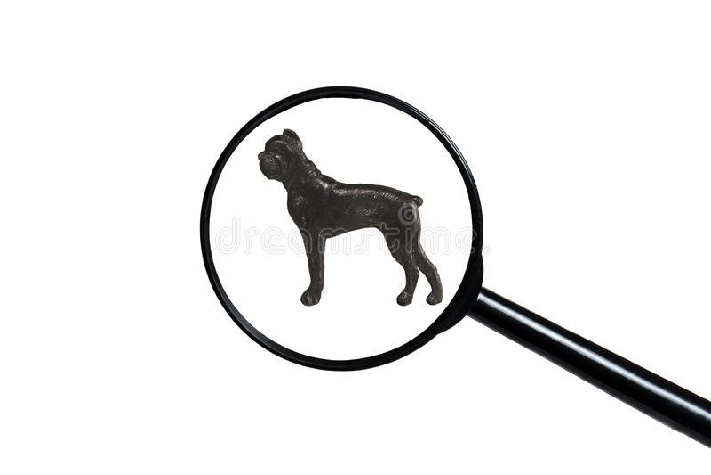拳击手狗剪影在白色背景的 免版税库存图片