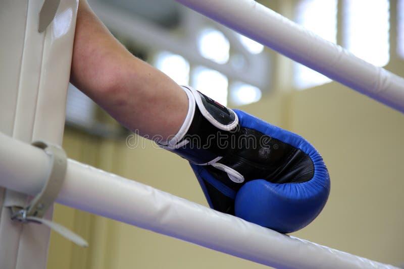 拳击手手套 免版税图库摄影