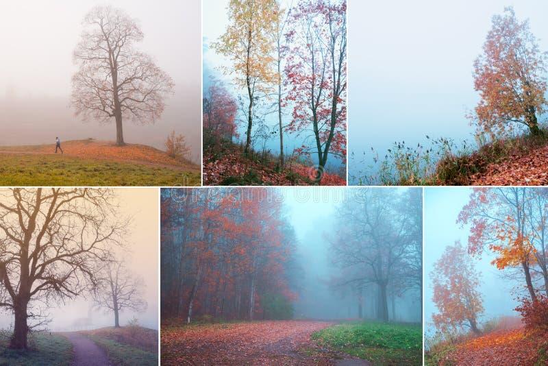 拼贴画有有薄雾的秋天美丽的景色  免版税库存照片