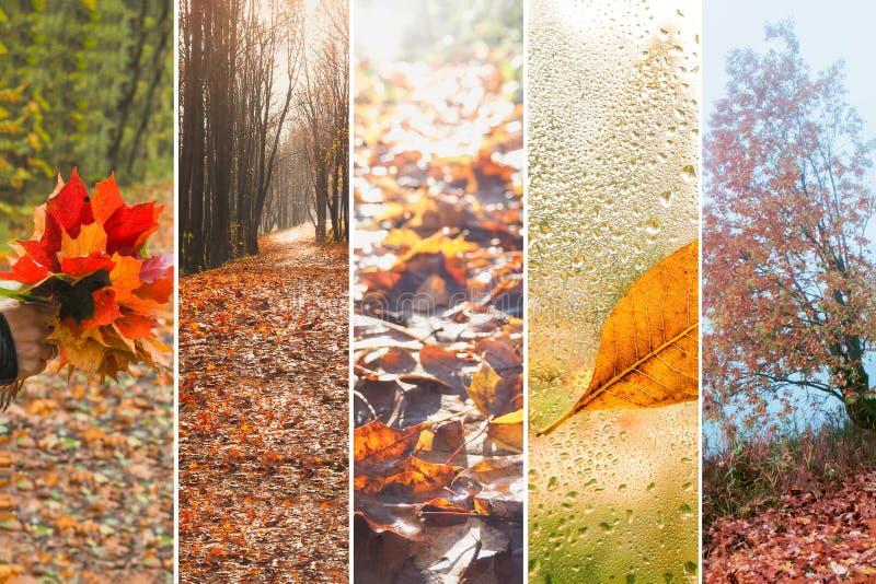 拼贴画有秋天多雨看法  库存图片