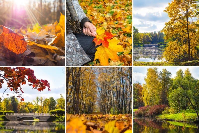 拼贴画有秋天明亮的看法  秋天风景拼贴画 免版税库存照片