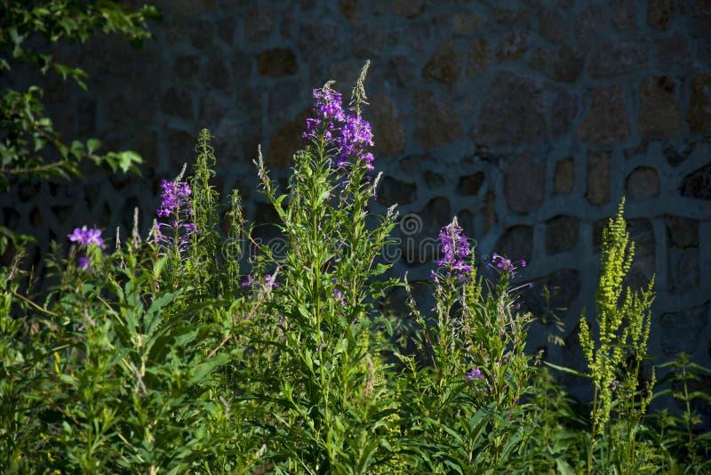 拼贴画草的照片开花抽象背景 库存图片