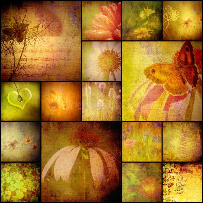 拼贴画册页自然、花和蝴蝶,葡萄酒样式 免版税图库摄影