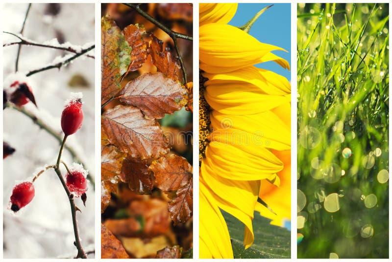 拼贴画四个季节 库存照片