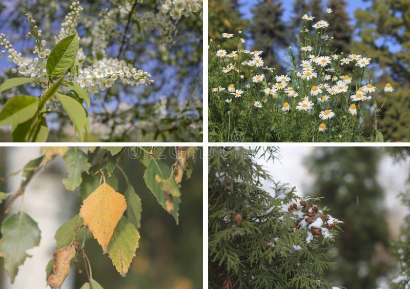 拼贴画春天,夏天,秋天,冬天 库存照片