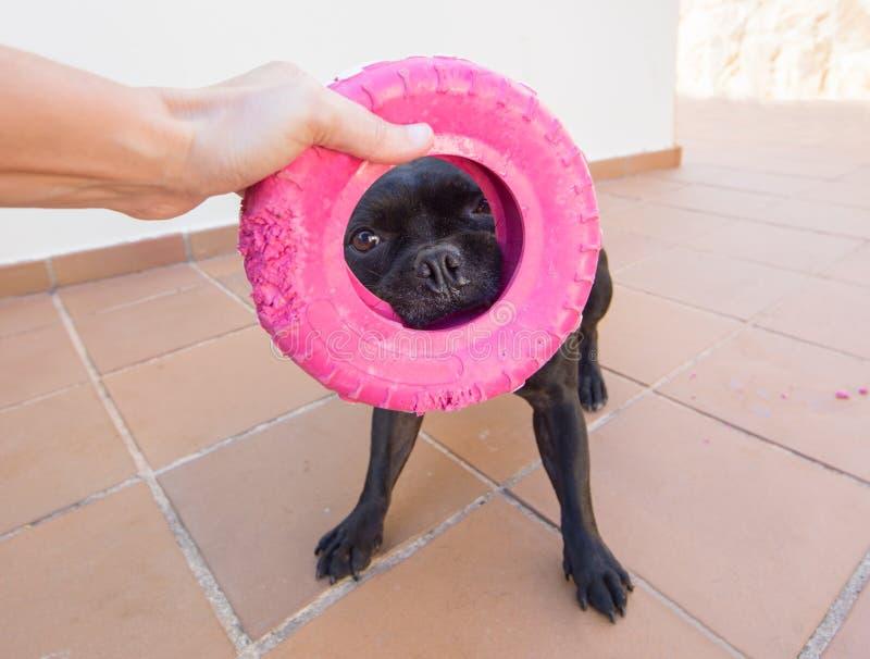 拿着一个桃红色玩具的逗人喜爱的沮丧 免版税库存照片