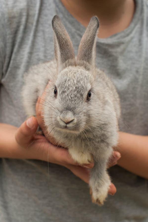 拿着一只小灰色兔子的灰色衬衣的男孩 免版税库存图片