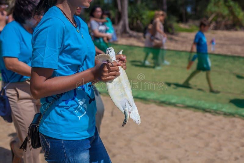 拿着一只幼小乌龟的志愿者 免版税库存图片