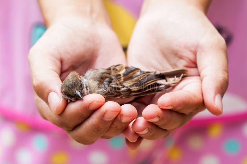 拿着一只死的鸟的妇女 图库摄影