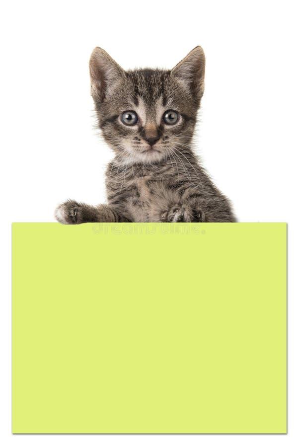 拿着一张黄色柱子纸的逗人喜爱的5个星期年纪平纹小猫 免版税库存照片