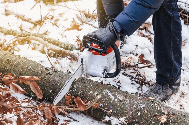 拿着一把电锯的一个人的手,砍在冬天森林砍伐森林的一棵树 收获木头 脚手架 免版税库存图片