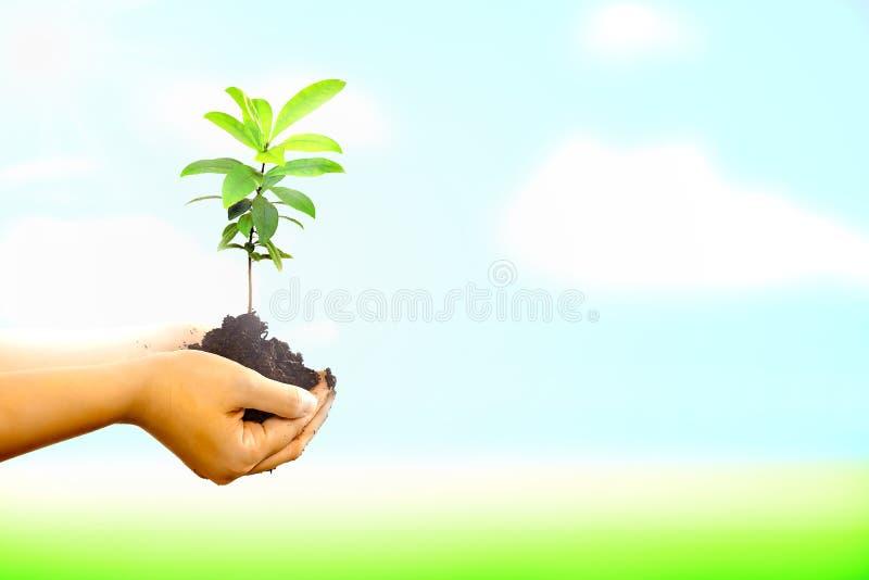 拿着一棵新的树的妇女肮脏的手 免版税库存图片