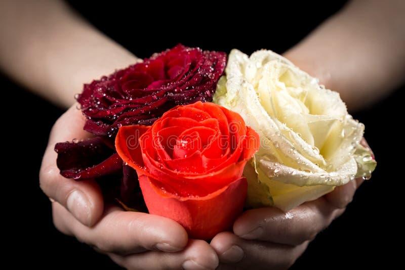 拿着三个五颜六色的湿玫瑰色头的女孩的手 免版税图库摄影