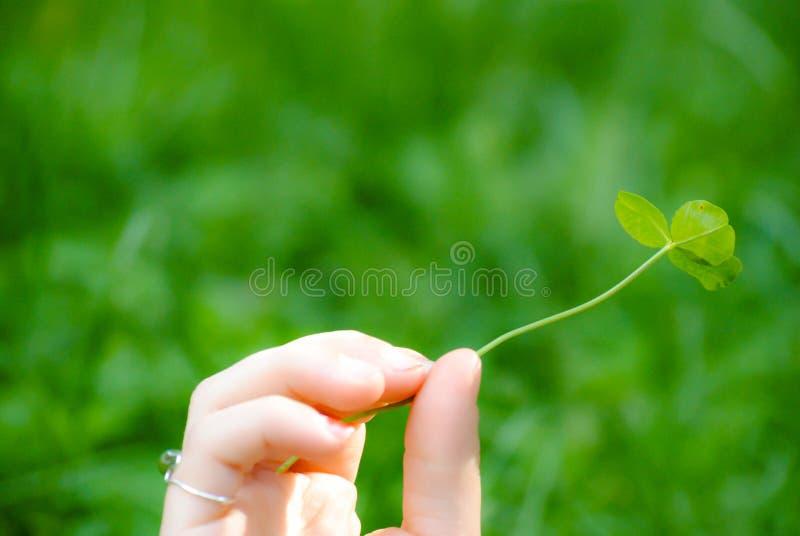 拿着三片叶子三叶草的孩子 图库摄影