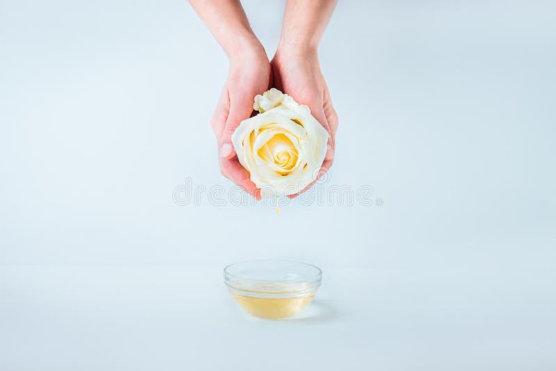 拿着与下跌的精油下落的女性手新鲜的玫瑰色花在白色背景的一个玻璃碗上被隔绝 免版税库存图片
