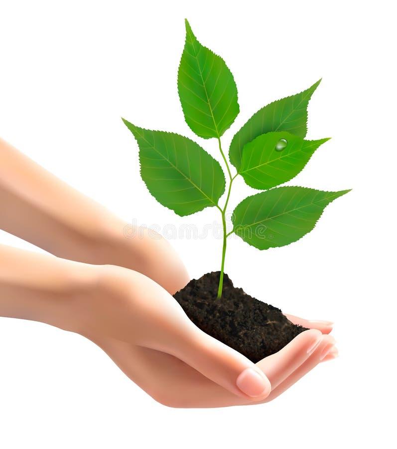 拿着与叶子的人的手绿色树 库存例证