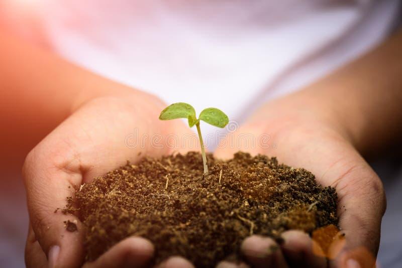 拿着与土壤的妇女手年轻婴孩树在背景中 免版税库存照片